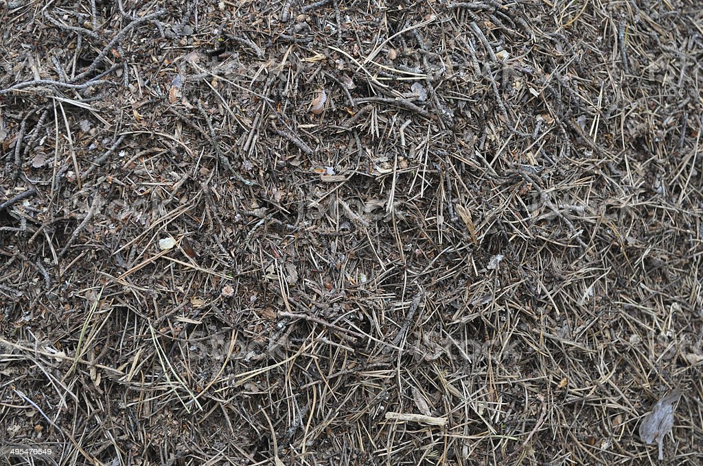 The texture of an anthill. royalty-free stock photo