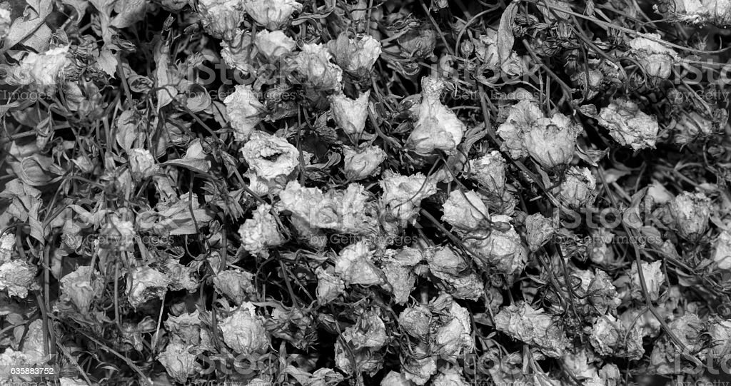 The texture of faded flowers stock photo