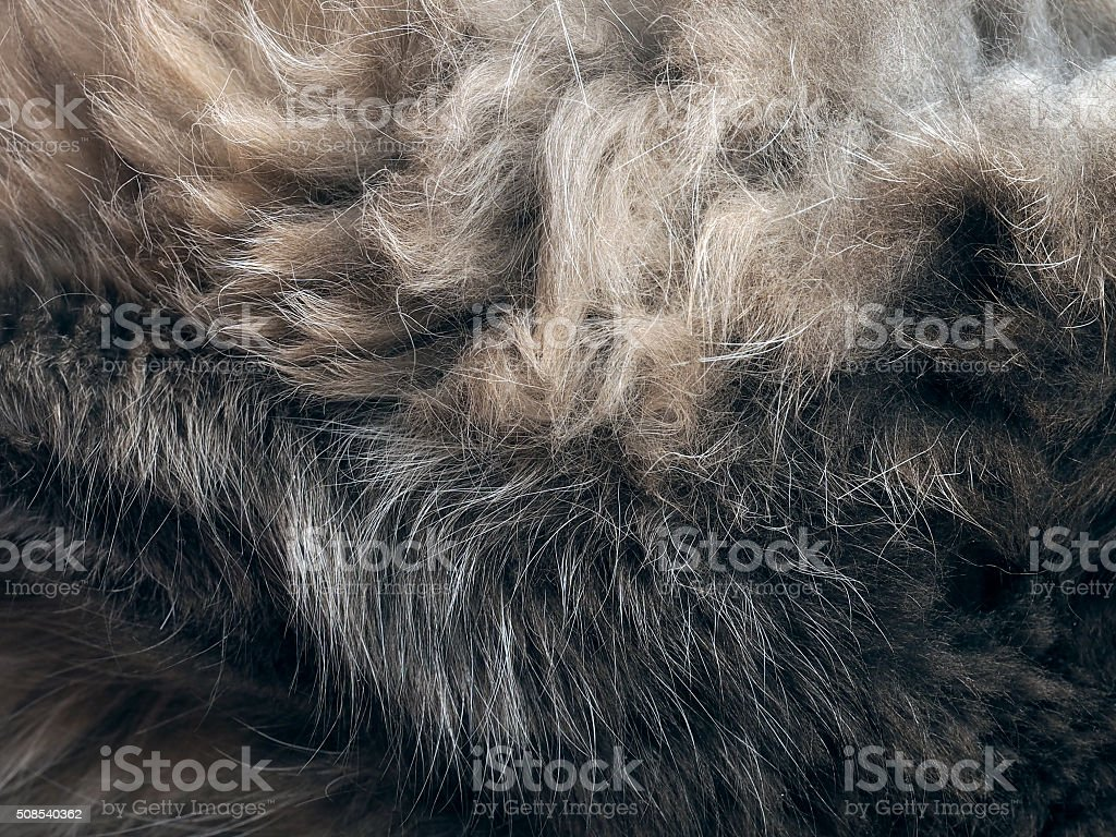 The texture of fur stock photo