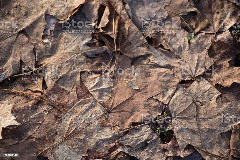 'The Thaw' Dead Leaves stock photo