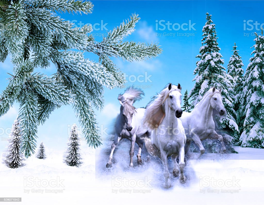 The three of white horses jump on the snow-covered stock photo