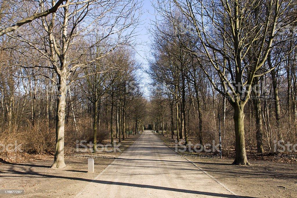 The Tiergarten in winter stock photo