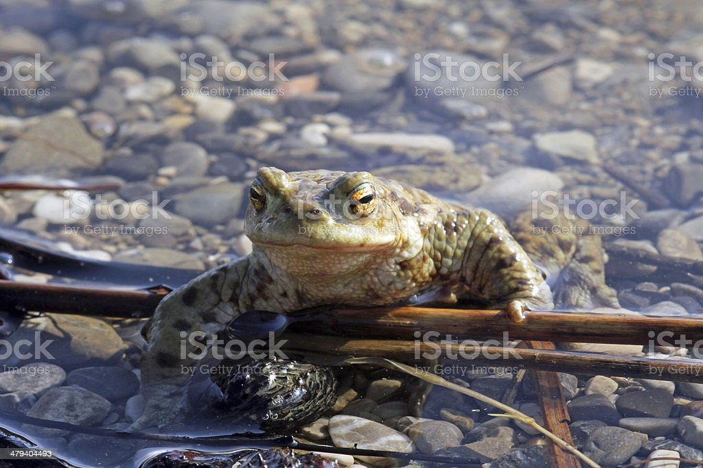 the toad stock photo