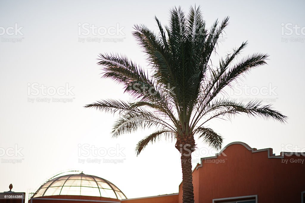 The tops of palm tree background evening sky on sunset stock photo