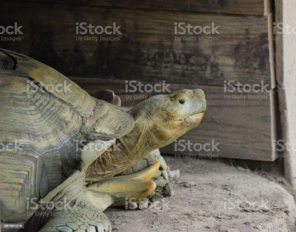 The Tortoise Sees All stock photo