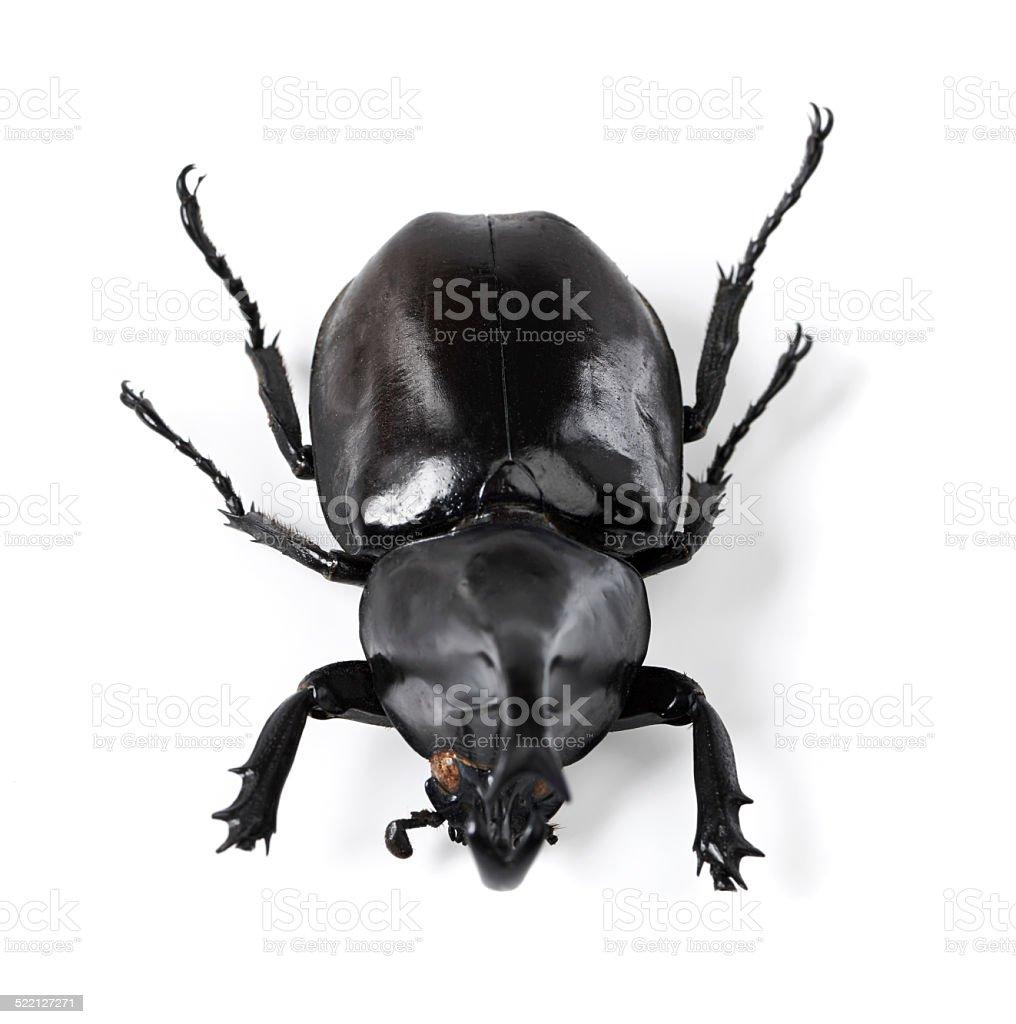 The toughest bug around! stock photo