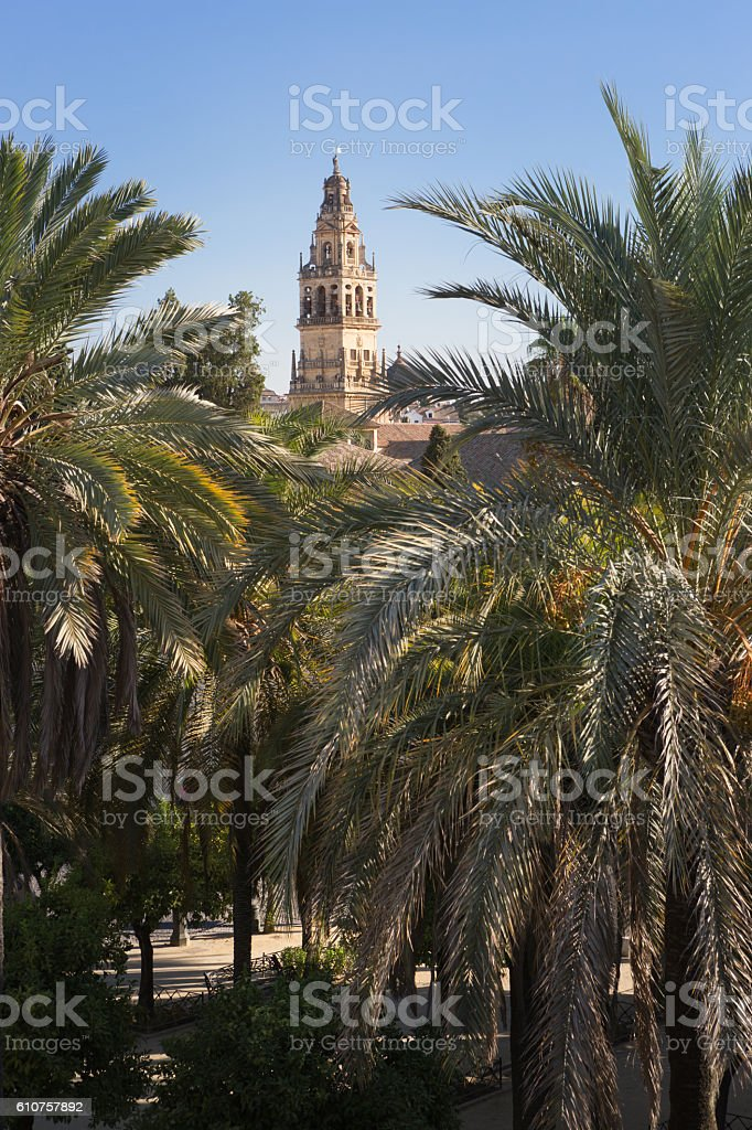 The tower clock of cathedral Mezquita behind palms, Cordoba, Spain stock photo