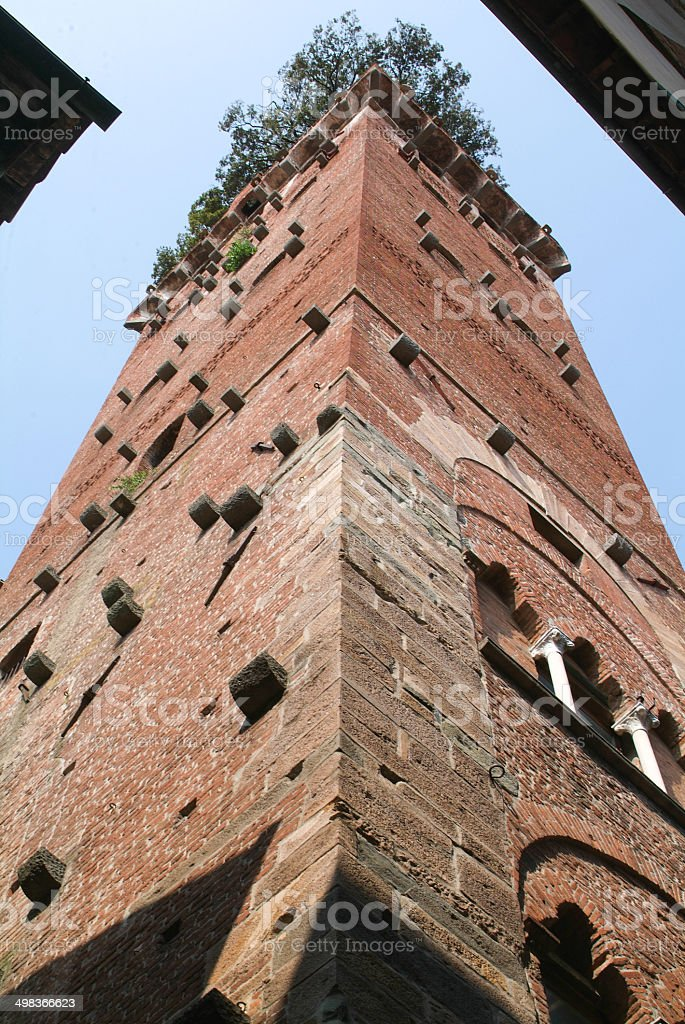 The tower of Guinigi at Lucca stock photo