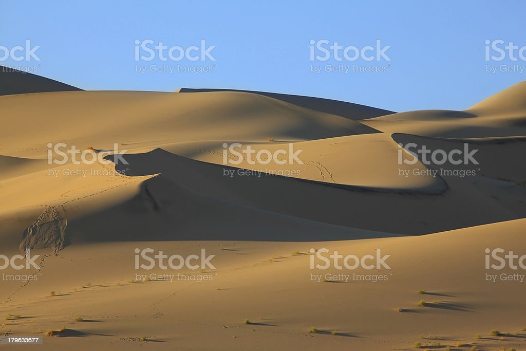 The traces of animals on sand royalty-free stock photo