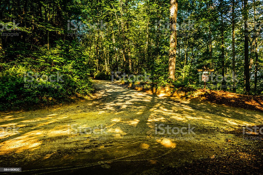 The trails at Dupont State Recreational Forest Park stock photo