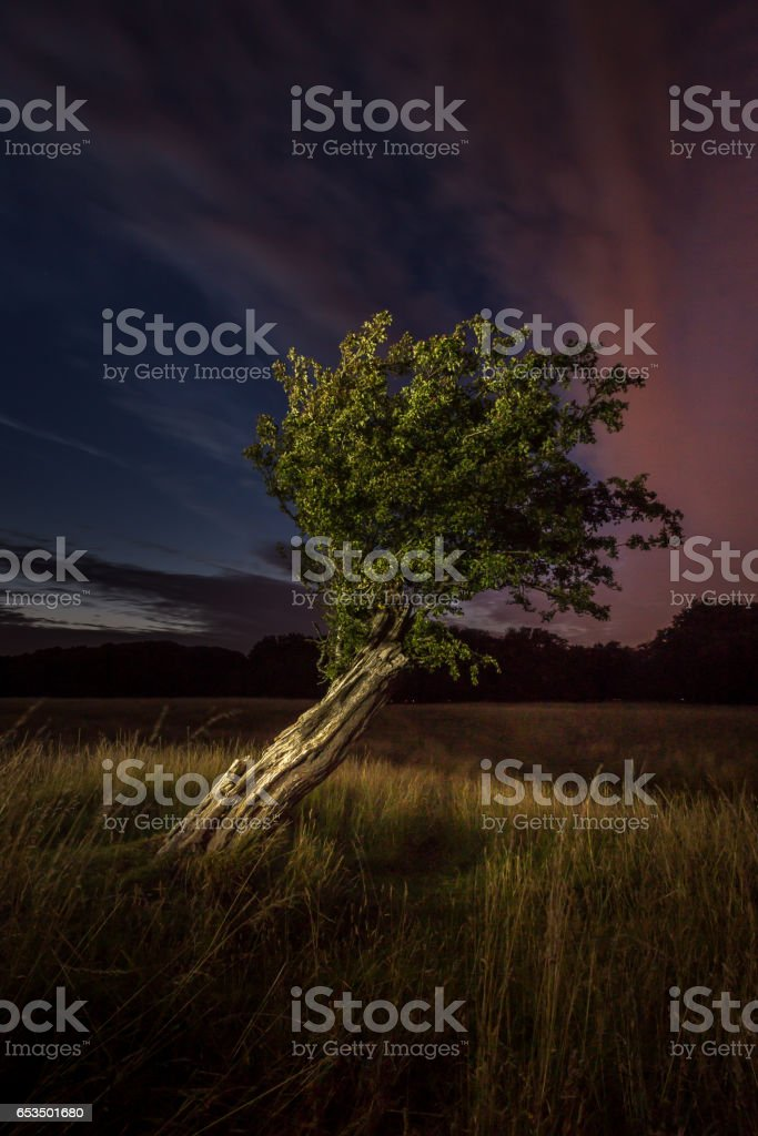 The tree and the darkness stock photo