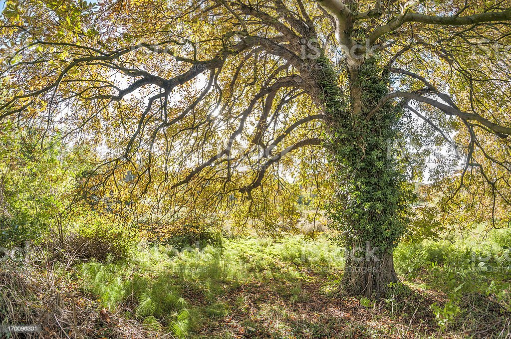 The Tree Canopy In Autumn royalty-free stock photo