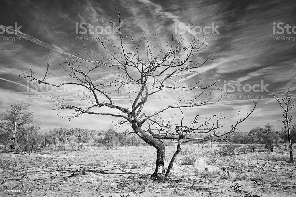 The Tree In Black And White stock photo