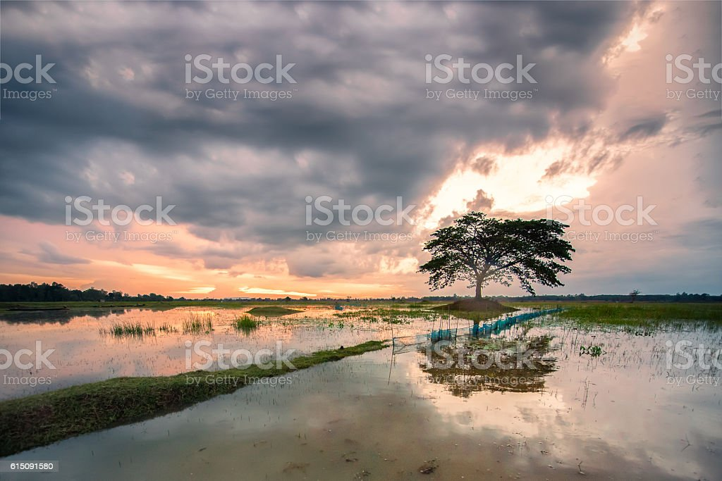 The tree in the middle of the stream stock photo