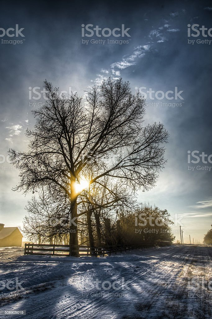 The Tree Is Bright royalty-free stock photo