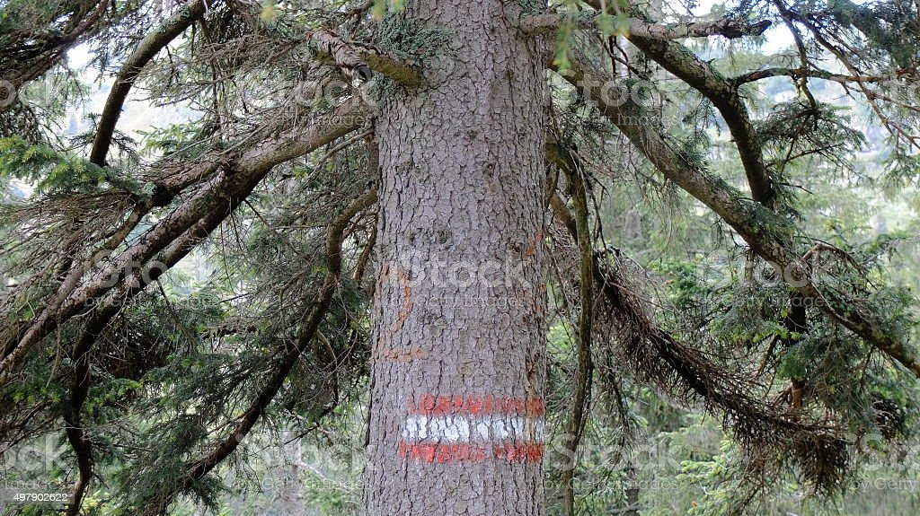 The tree is the sign stock photo