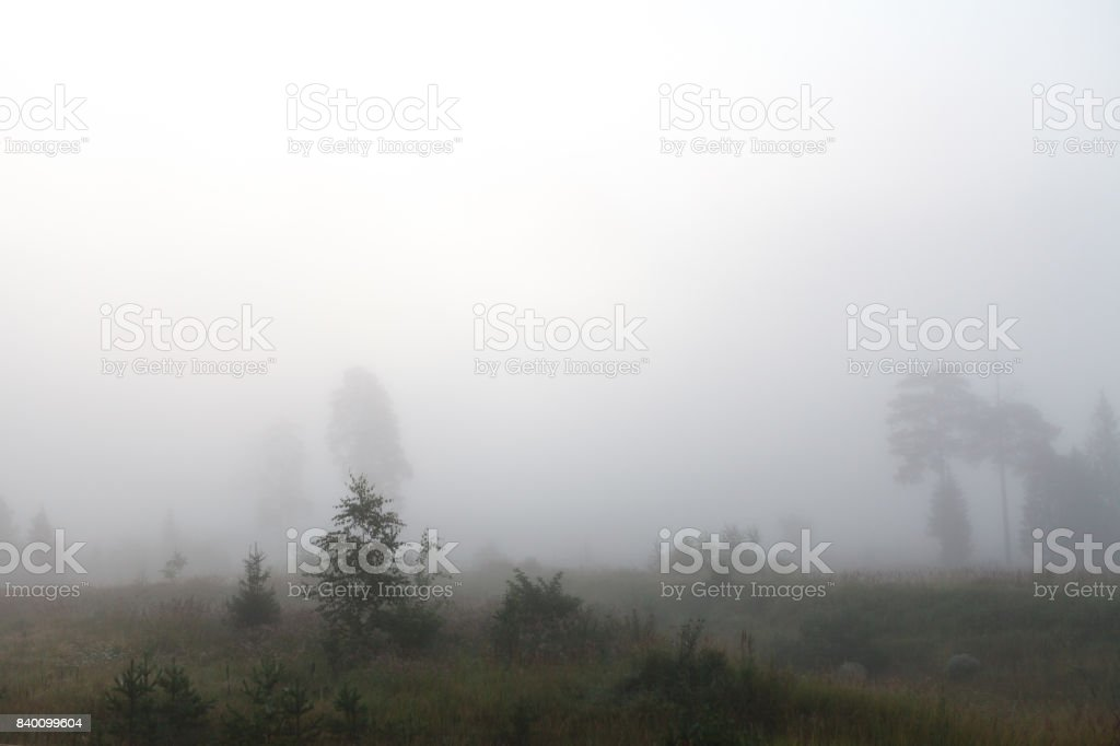 The tree near the road and the river in a fog stock photo