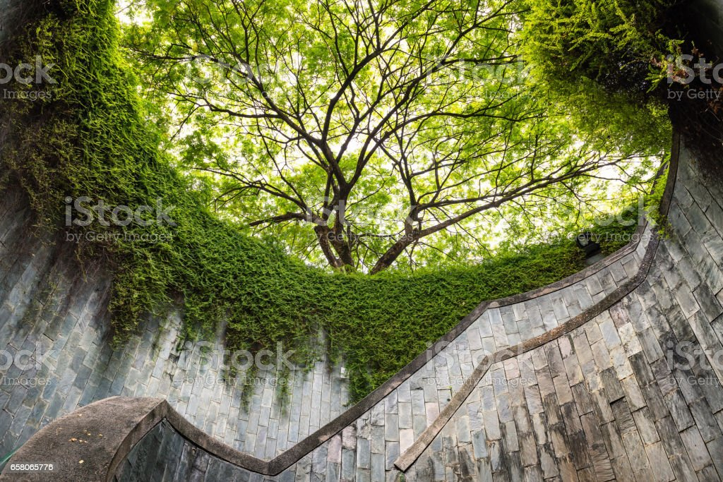 The tree over tunnel walkway at Fort Canning Park and Penang road., Singapore stock photo