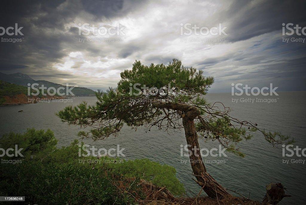 The Tree royalty-free stock photo
