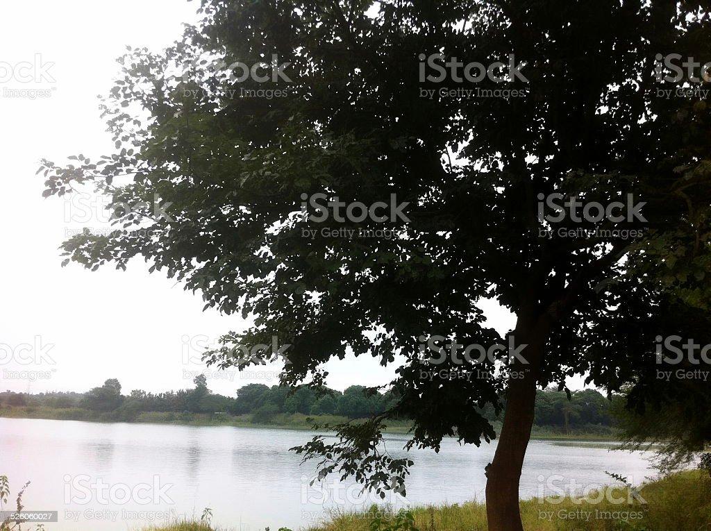 The Tree stock photo