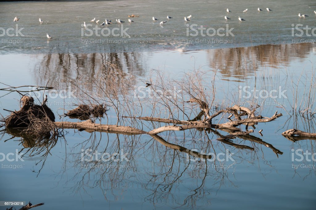 The trees are submerged in the water stock photo