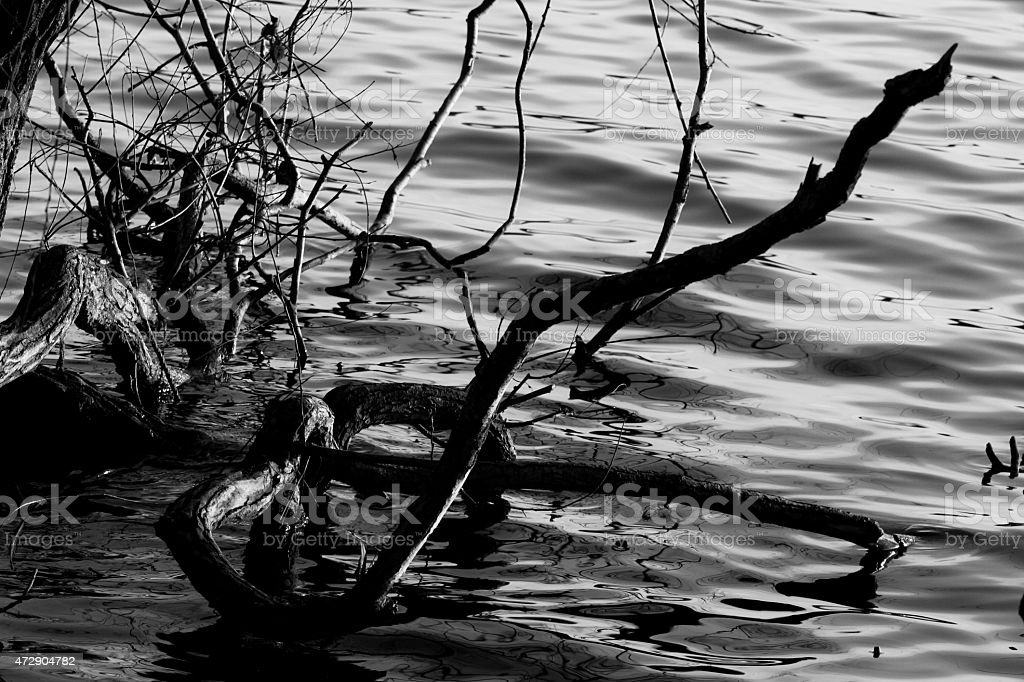 The trees by the water in black & white royalty-free stock photo
