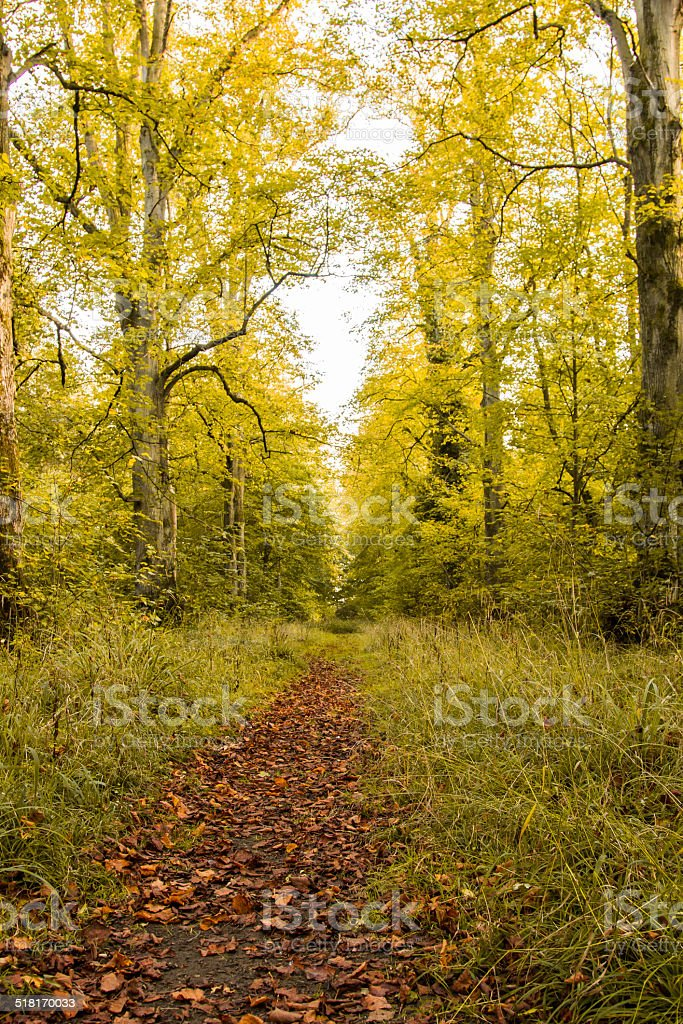 The trees in autumn stock photo