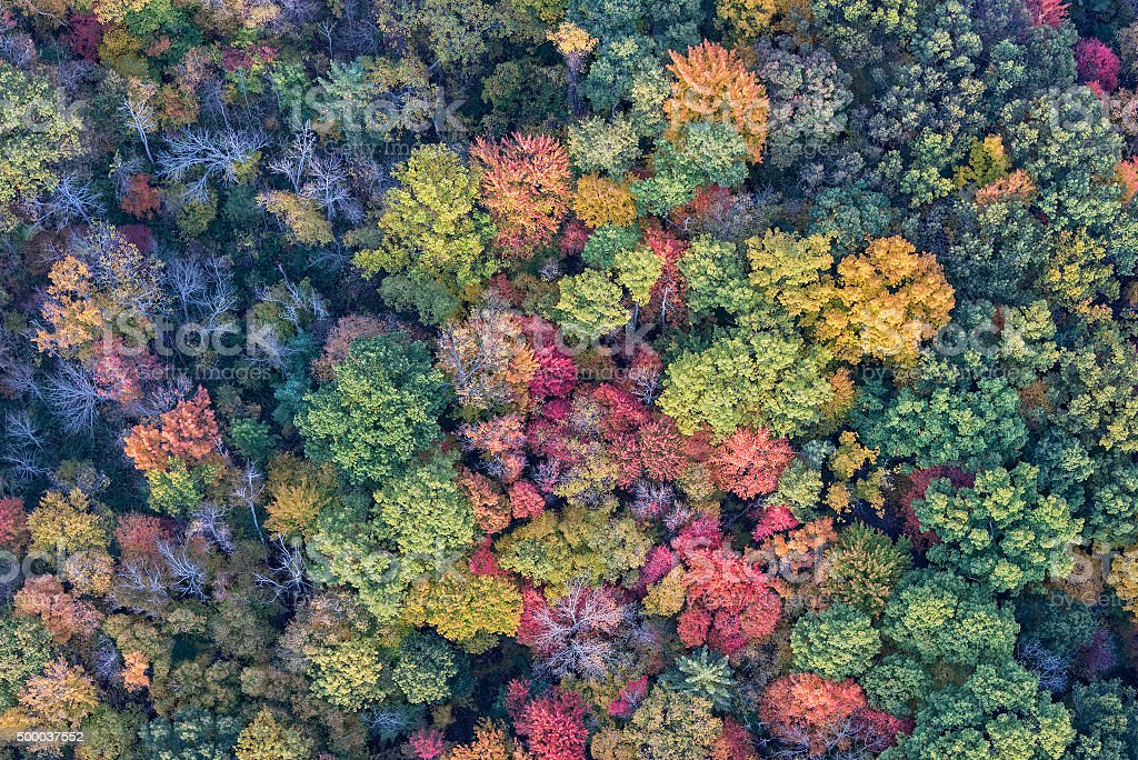 The Trees Of Autumn From Above stock photo