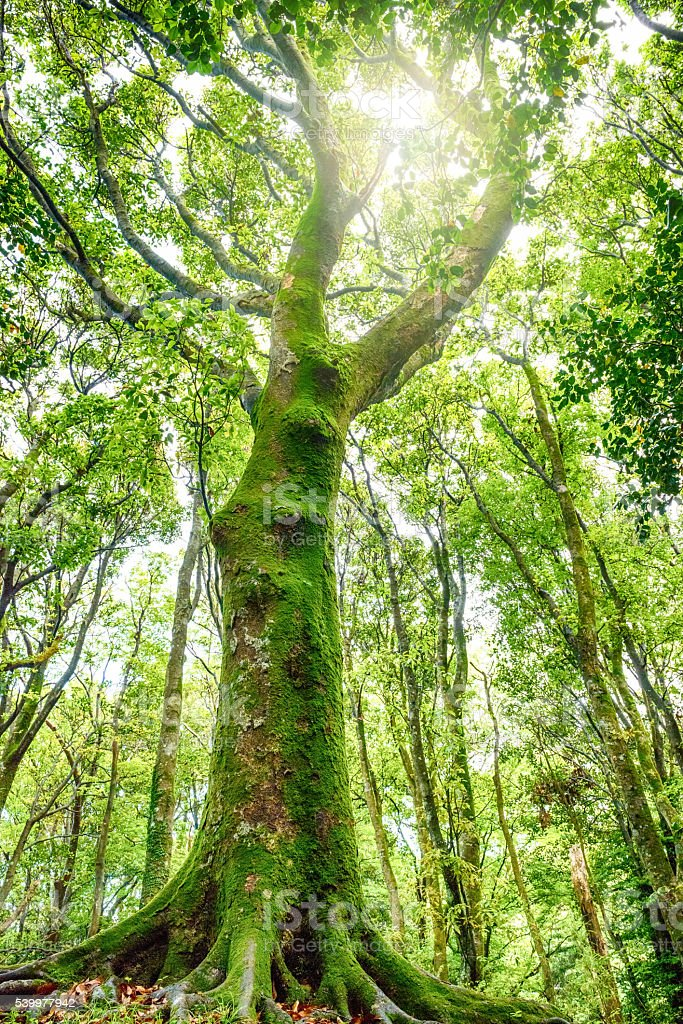 The trees of fresh green in the forest stock photo