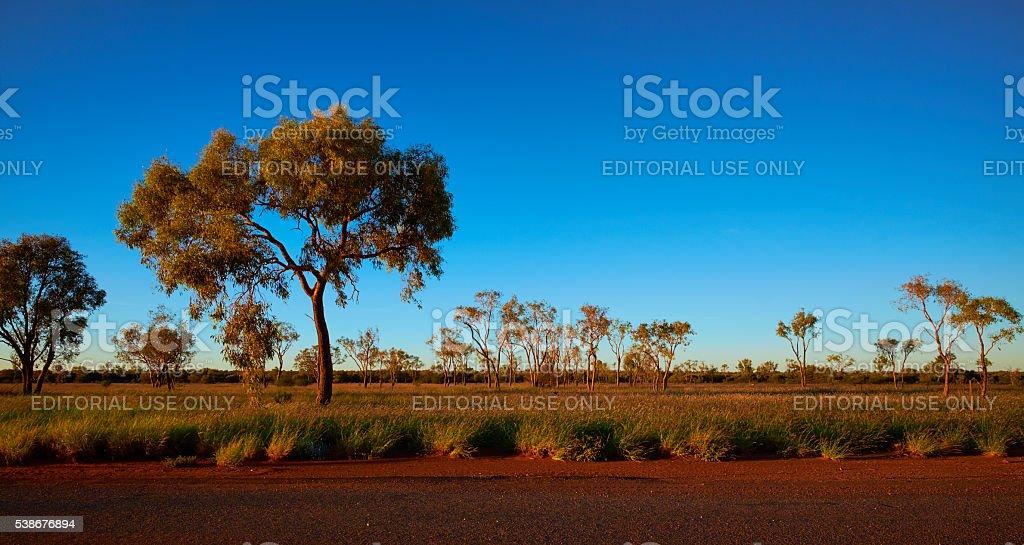 The Trees Of Uluru stock photo