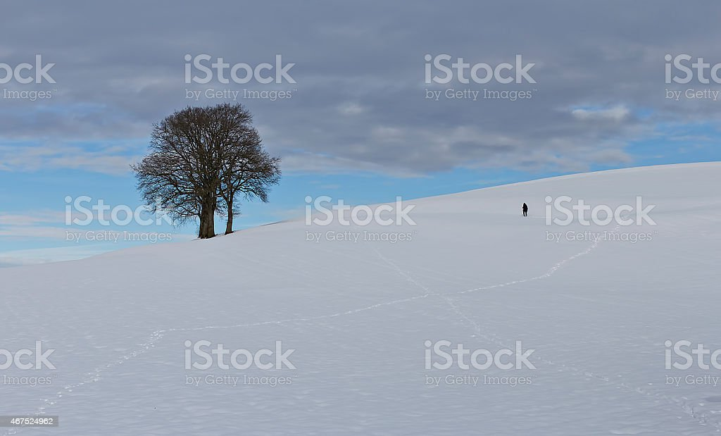 The trees on the hill royalty-free stock photo