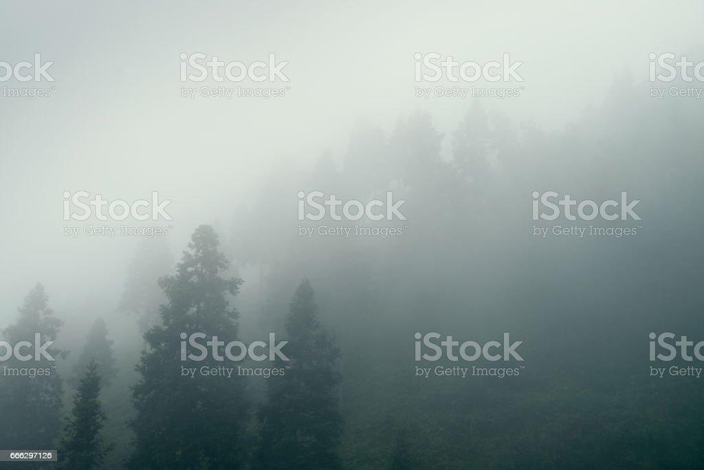 The trees stock photo