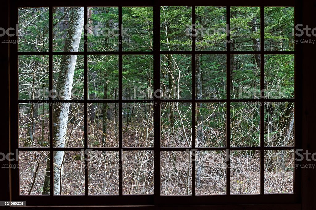 The trees seen from a window stock photo