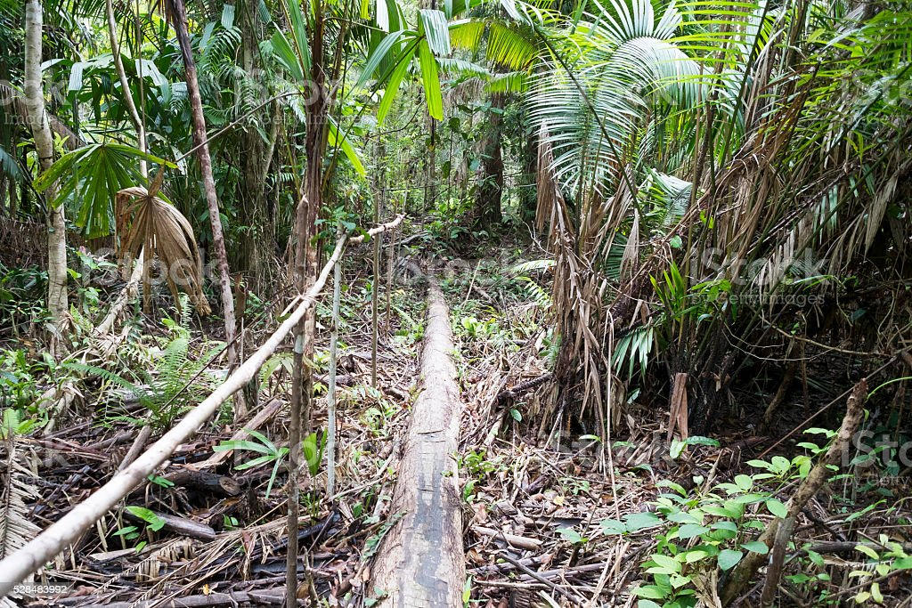 The trek and wooden stepping made by Mentawai tribe. stock photo