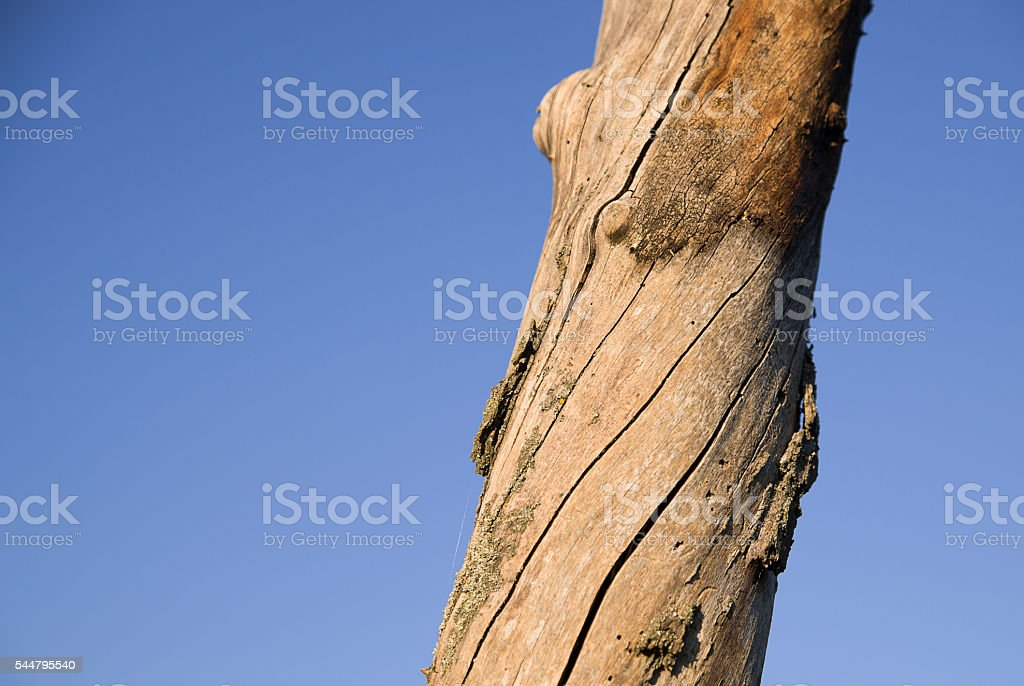 The trunk of dead tree against the sky stock photo
