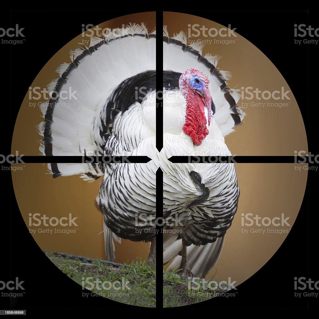 The Turkey. royalty-free stock photo