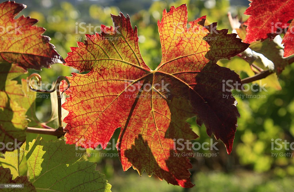 The Turning Leaves royalty-free stock photo