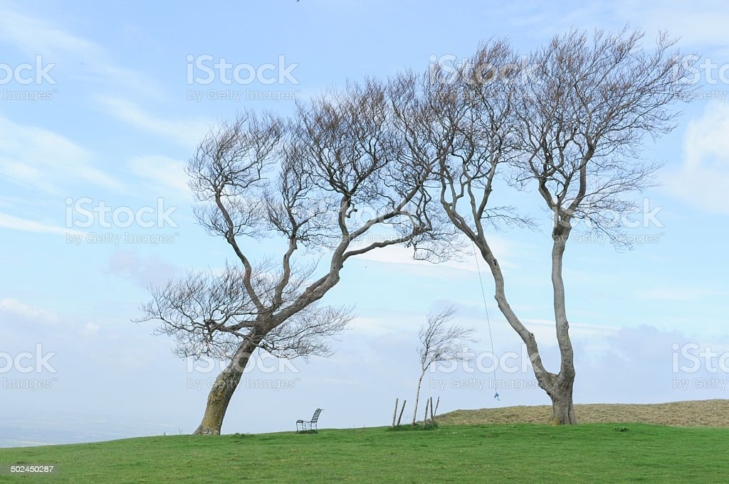 The Twins, a pair of Beech trees, in the Cotswolds stock photo