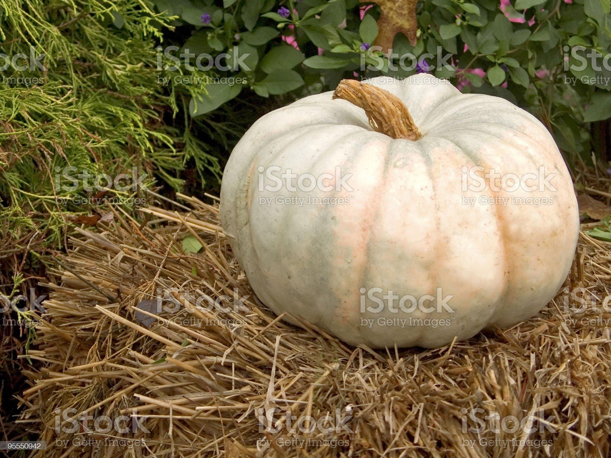 The Un-Pumpkin royalty-free stock photo