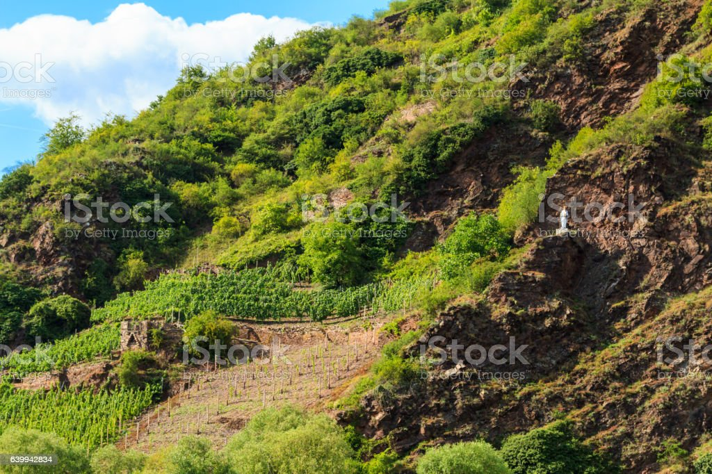 The view of vineyards in Germany, Cochem at the Moselle stock photo