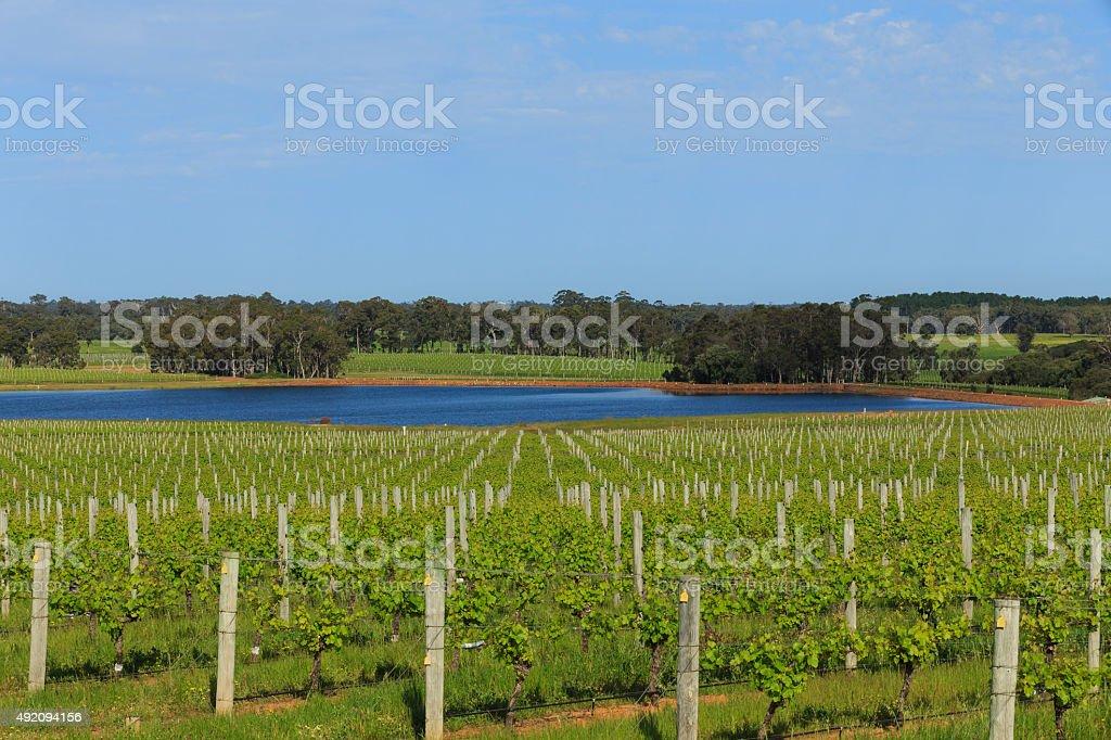 The  Vineyard Dam stock photo