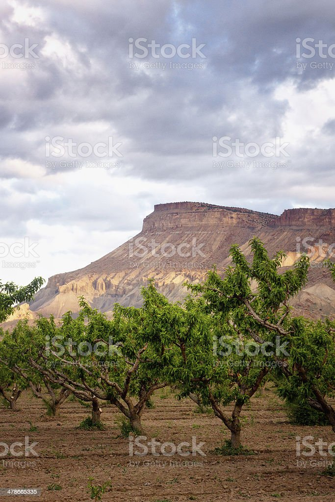 The Vineyards and Mt Garfield, Colorado stock photo