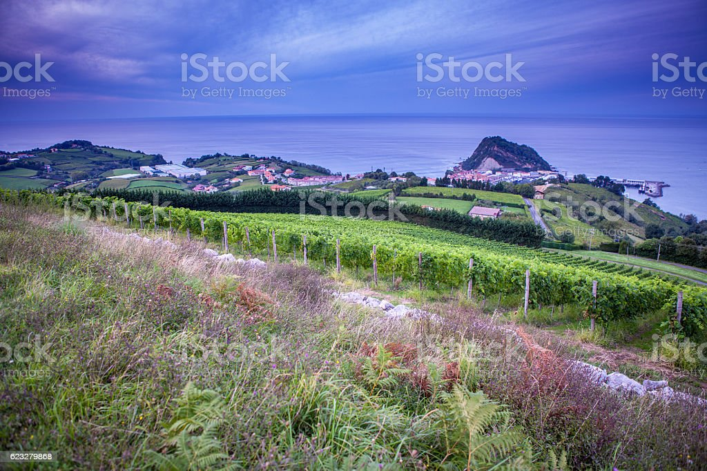 The vineyards of  Getaria stock photo