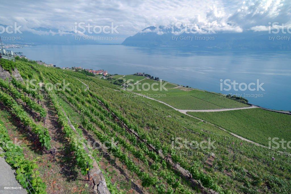 The vinyards of Lavaux in Switzerland stock photo
