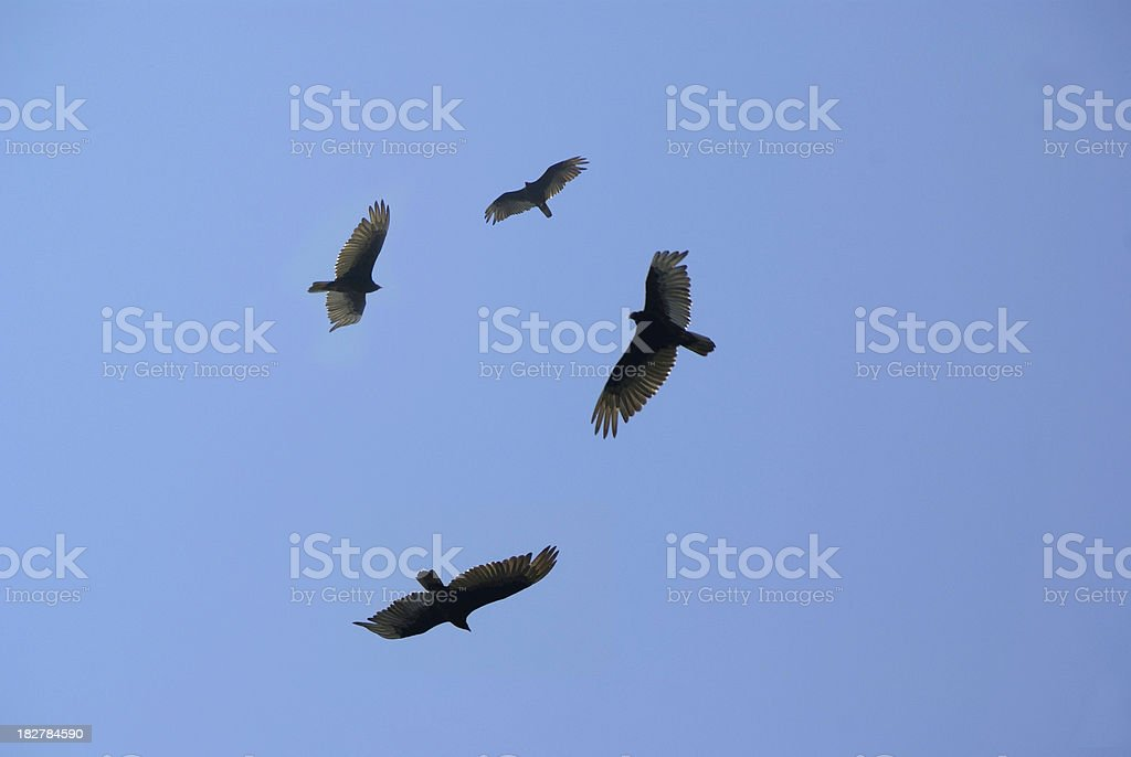 The Vultures are Circling stock photo