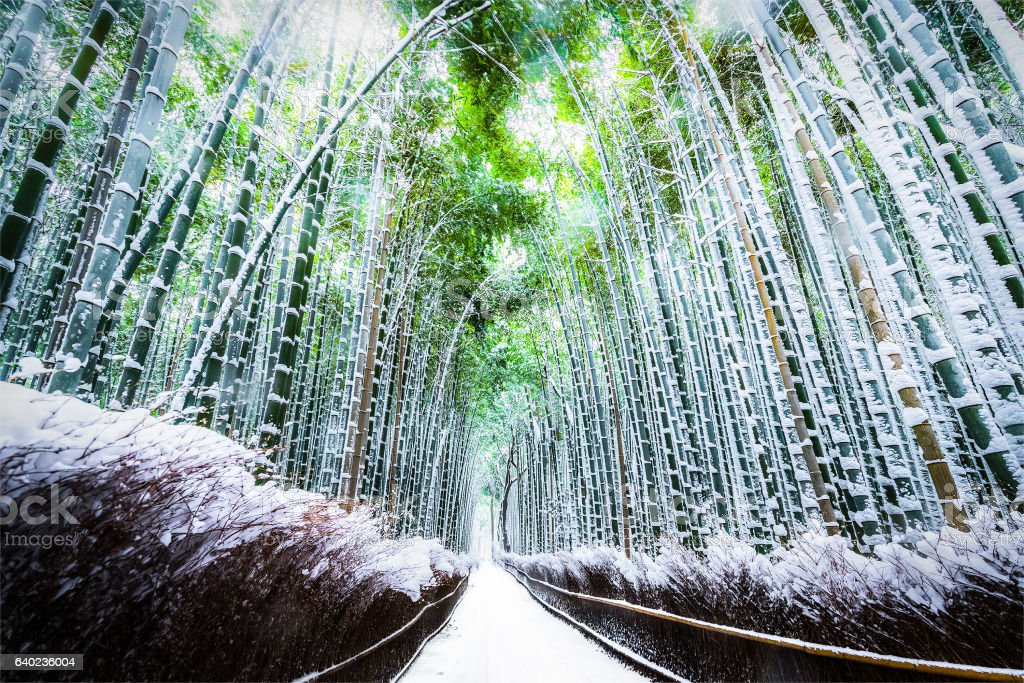The walking paths and the bamboo groves with snow fall stock photo
