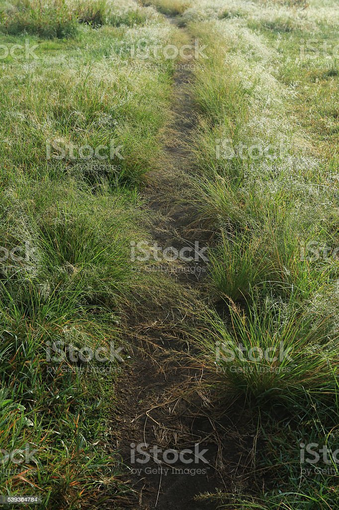 The walkways above the morning dew stock photo