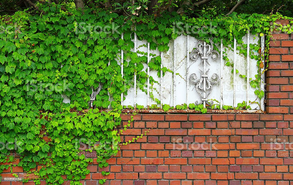 The wall of the brick and green leaf foto de stock libre de derechos