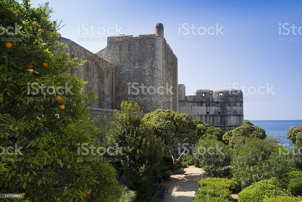 The walls of dubrovnik and citrus tree stock photo