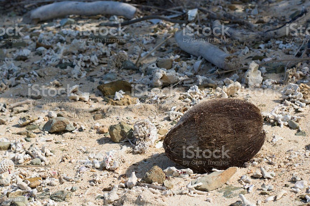 The washed ashore was coconut royalty-free stock photo